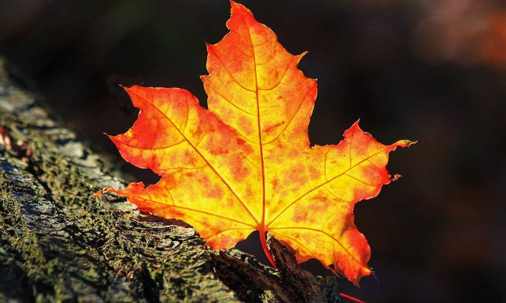 Städdag söndag 21 oktober
